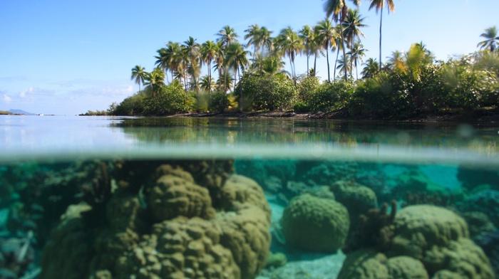 water, tropical, split view