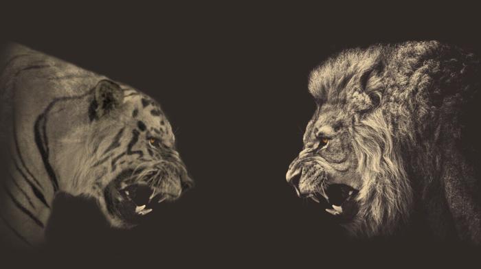 animals, tiger, lion, sepia, photo manipulation