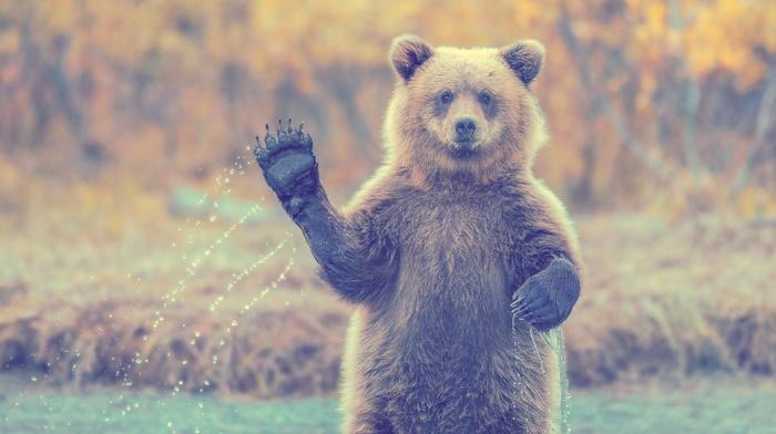 filter, animals, bears