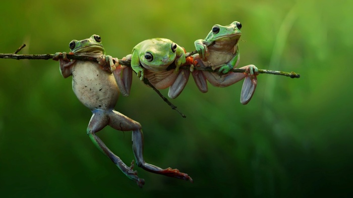 animals, amphibian, frog, nature, twigs