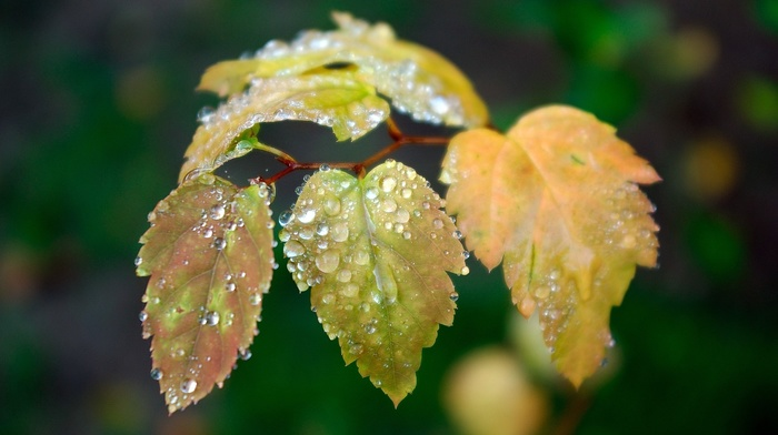 dew, foliage, macro