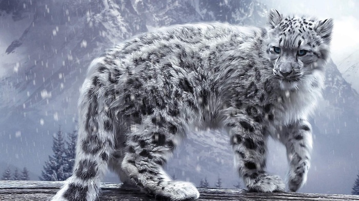snow, leopard, animals, nature, snow leopards, winter