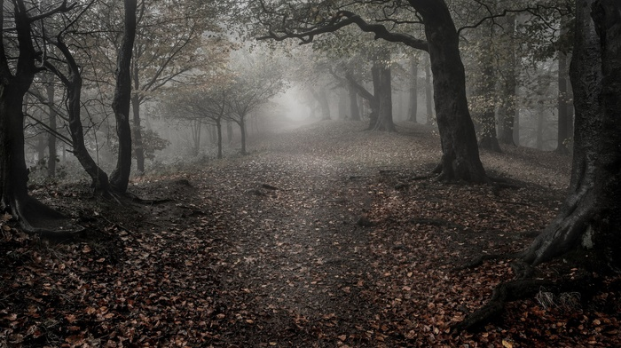 trees, branch, leaves, fall, wood, forest, mist, landscape, nature, roots