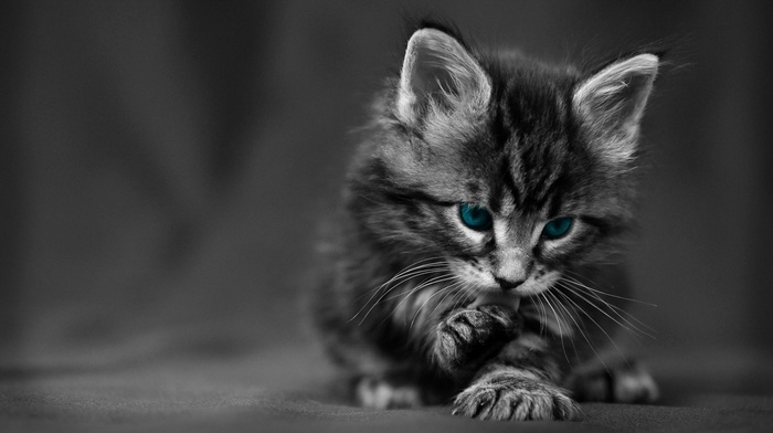 texture, selective coloring, blue eyes, kittens, cat, baby animals, animals