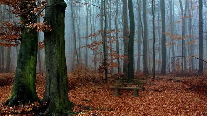 forest, landscape, bench, nature, fall, mist, leaves, moss, branch, wood, trees