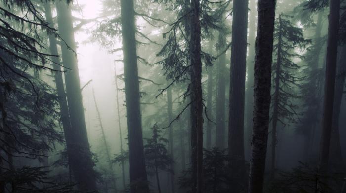 wood, plants, trees, mist, forest, leaves, nature