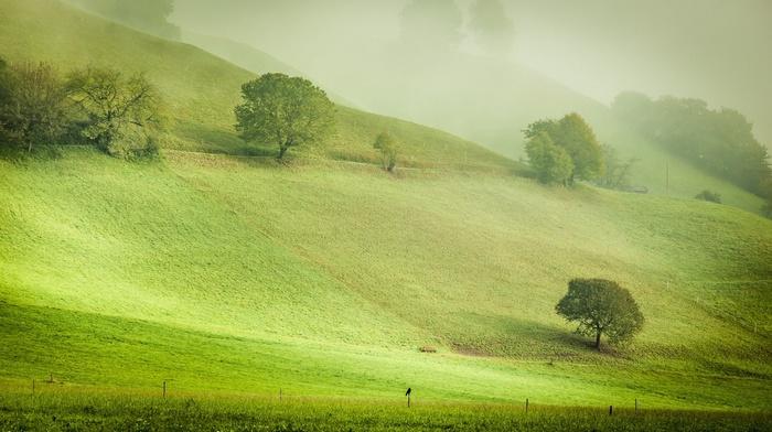 field, hill, green, bench, trees, nature, Austria, morning, mist, Europe, grass, landscape