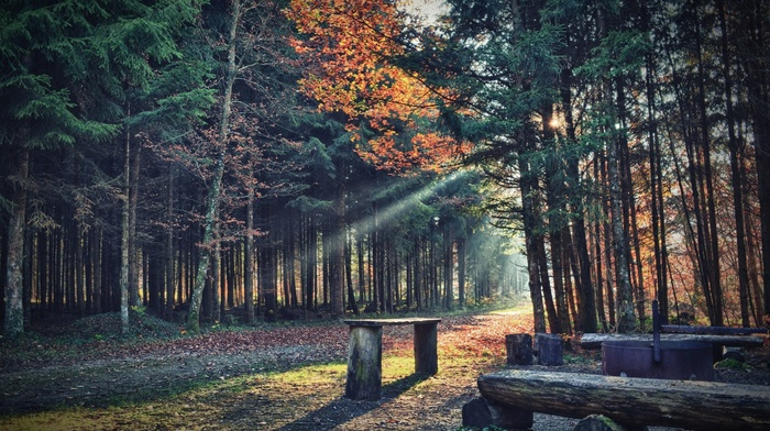 path, shadow, sun rays, bench, trees, forest, branch, plants, nature, leaves, fall, wood