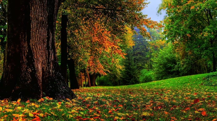 forest, grass, nature, leaves, wood, branch, field, trees, fall, landscape