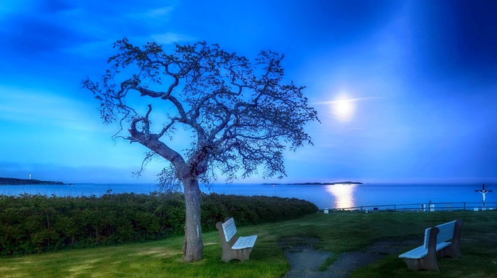 sea, bench, trees, nature, garden, moon, evening, grass, landscape