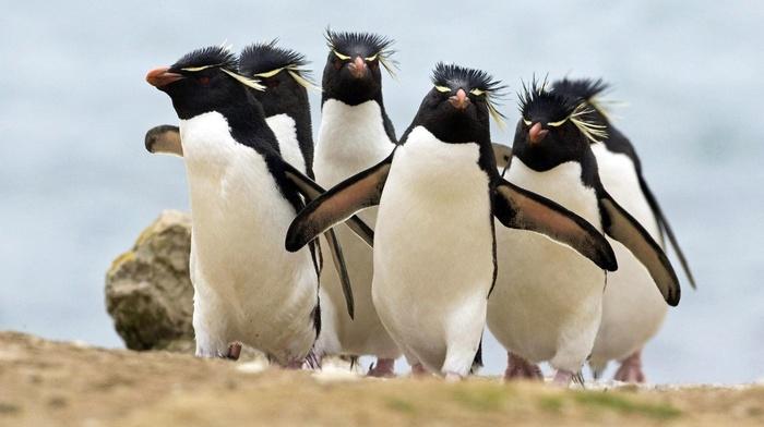 animals, birds, penguins