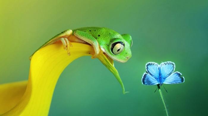 macro, frog, animals