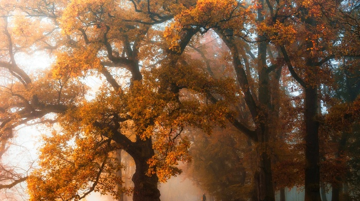 walking, trees, orange, landscape, fall, park, bench, mist, nature