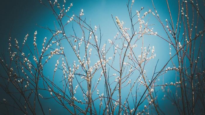 nature, Latvia, flowers, plants, vignette
