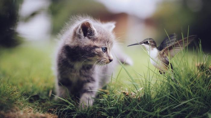 baby animals, kittens, nature, animals, grass, cat, birds, hummingbirds