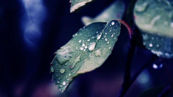 macro, water drops, nature