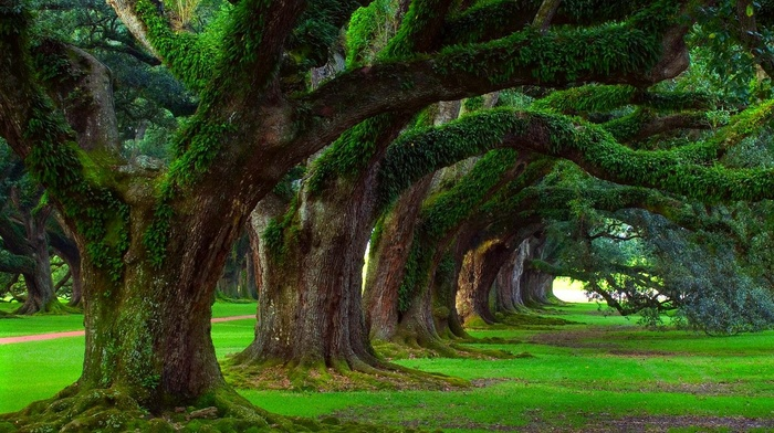 grass, nature, ancient, moss, landscape, oak trees, trees, green