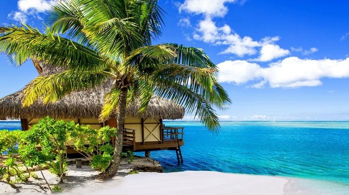 tropical, landscape, nature, palm trees, sea, Bora Bora, summer, beach, clouds, Vacations