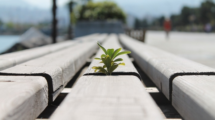 blurred, plants, macro, bench