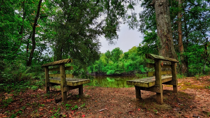 HDR, nature, forest, bench, trees, leaves, lake, landscape