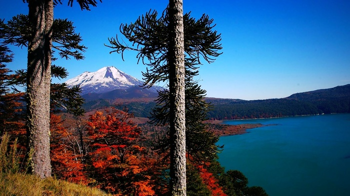landscape, fall, nature, lake, monkey puzzle tree, grass, forest, mountain, snowy peak, Chile, morning, volcano, trees