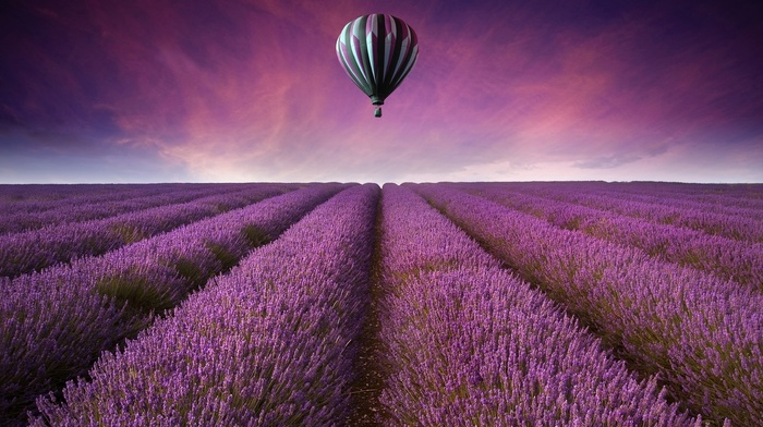 purple flowers, landscape, lavender, field, hot air balloons