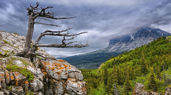 dead trees, trees, cliff, nature, overcast, mountain, forest, clouds, landscape