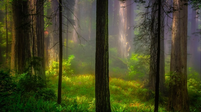 leaves, wood, trees, forest, grass, sunlight, branch, nature, plants, mist