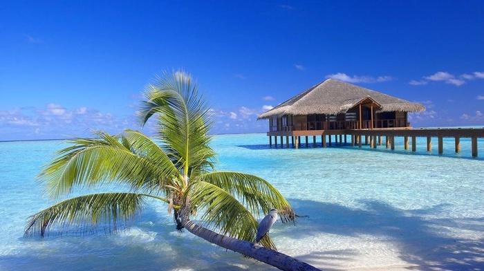 walkway, sand, palm trees, bungalow, beach, landscape, Vacations, tropical, nature, Maldives, resort, birds, sea