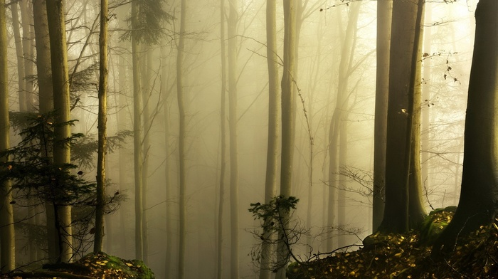 wood, moss, leaves, mist, nature, forest, trees, plants, branch