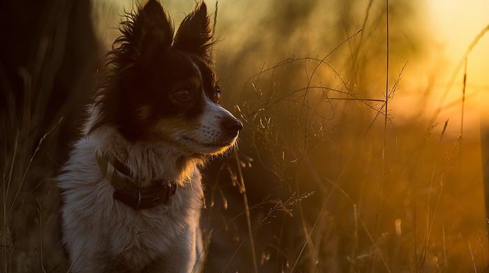 animals, twigs, sunlight, dog