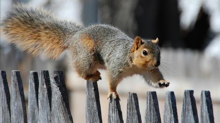 portrait, squirrel