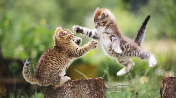 blurred, animals, kittens, cat