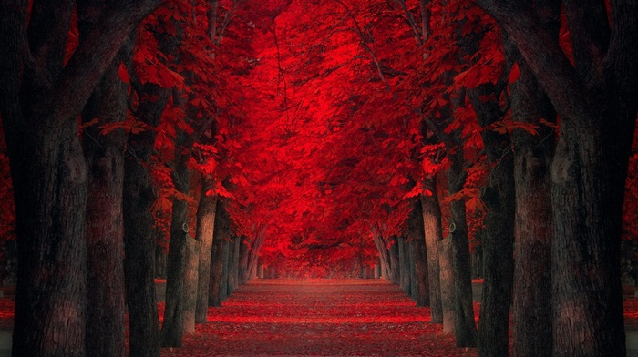 red leaves, path, trees, landscape, red, park, nature, leaves, fall