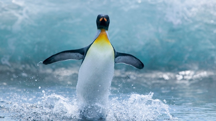 animals, penguins, wildlife, birds, nature