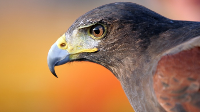 birds, wildlife, animals, nature