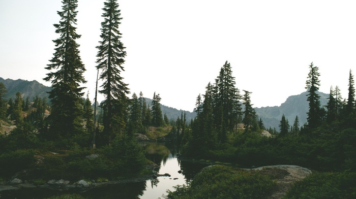 river, forest clearing, summer