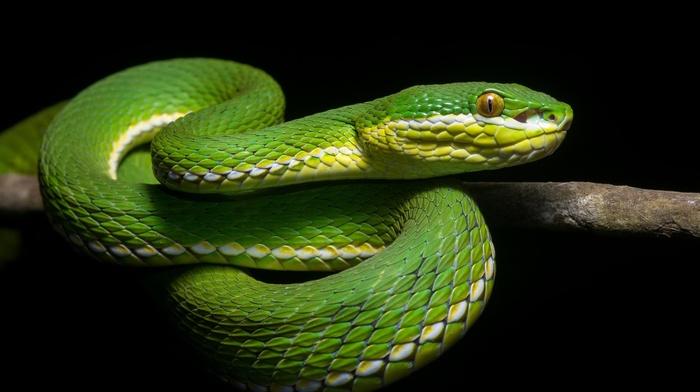 animals, snake, reptile