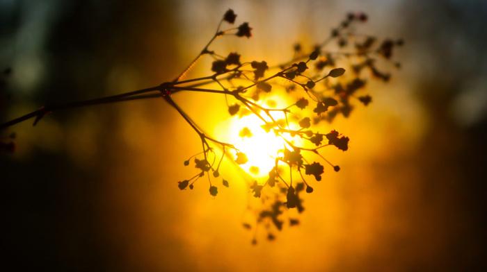 plants, glowing, blurred, silhouette, sunlight, bokeh, depth of field, nature, twigs, sunset