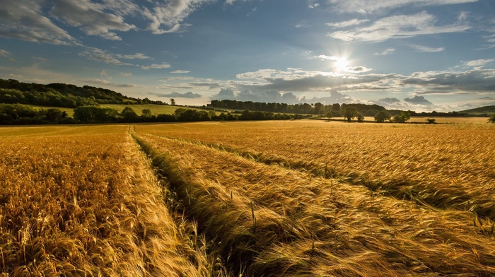landscape, nature, farm, wheat