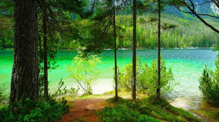 lake, shrubs, summer, trees, mountain, landscape, forest, nature
