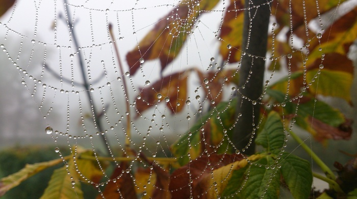 morning, trees, leaves, fall, spiderwebs, depth of field, water drops, nature