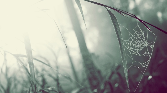 photography, depth of field, grass, macro, blurred, spiderwebs