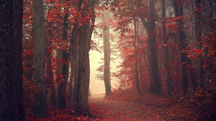 fall, forest, nature, red leaves, landscape, leaves, mist, path, trees, red