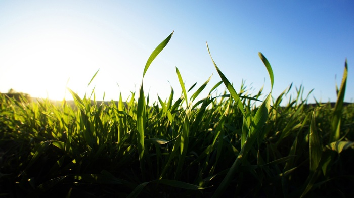 grass, nature, clear sky, landscape, green, depth of field, macro, blurred