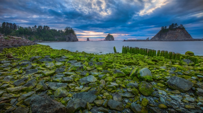 sea, clouds, morning, sunset, landscape, rock, moss, Olympic National Park, forest, USA, stones, nature, trees, water