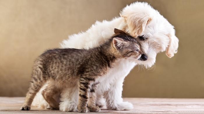 baby animals, cat, kittens, pet, nature, dog, love, animals