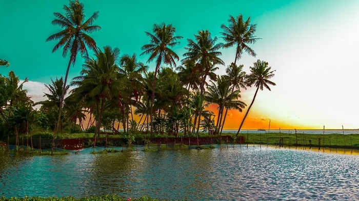 nature, water, landscape, sunset, tropical, palm trees, sea, beach
