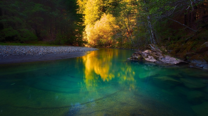 water, forest, green, calm, trees, yellow, landscape, nature, river, turquoise