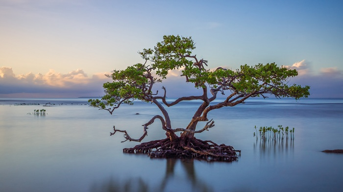 reflection, calm, leaves, water, plants, clouds, nature, roots, island, landscape, trees, branch, horizon